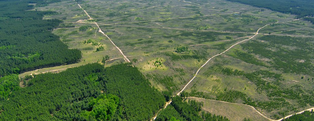 Forest-Forestry